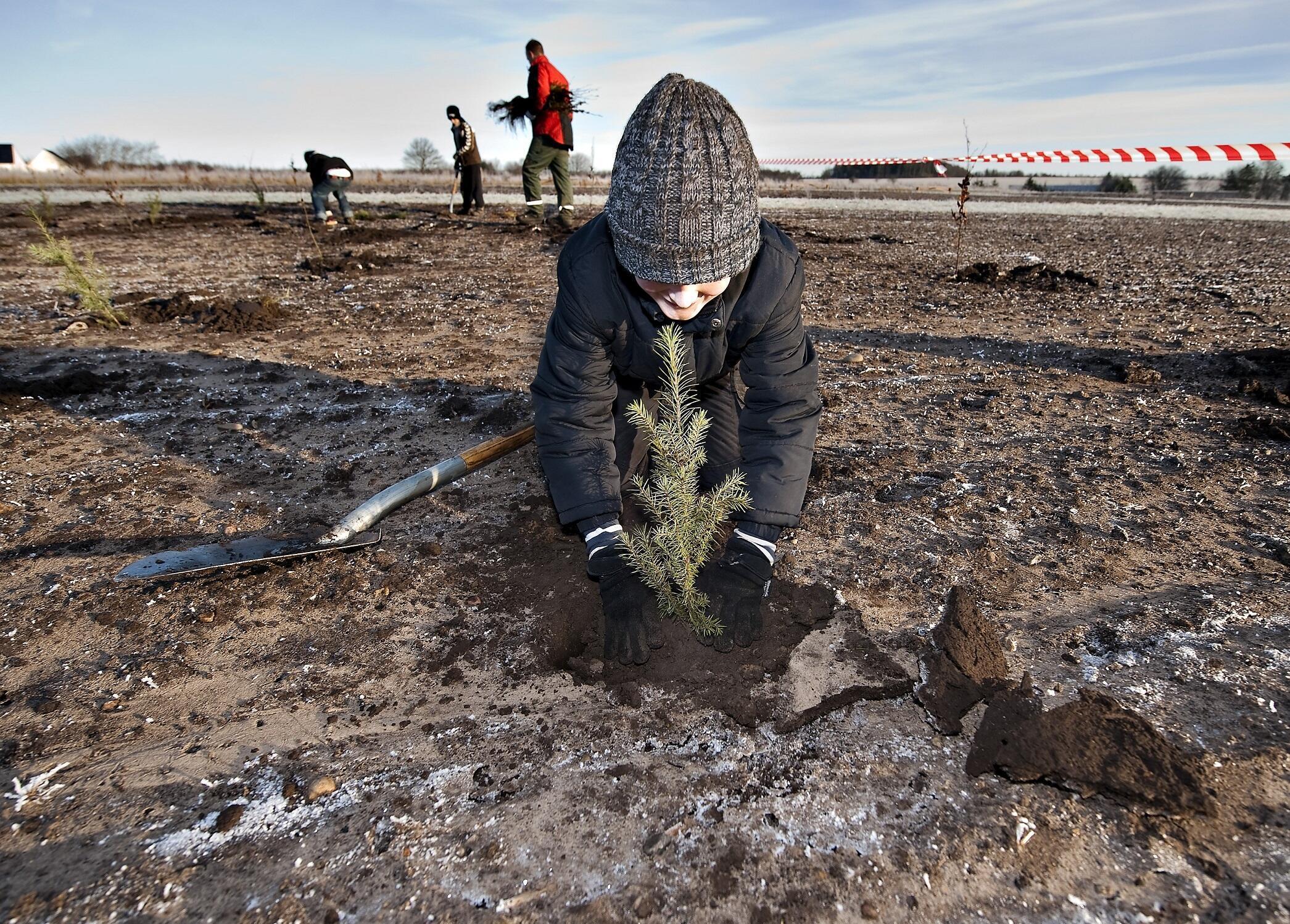 Uma criança planta uma árvore no solo congelado perto de Drastrup, no oeste da Dinamarca. (Foto ilustrativa de dezembro de 2009)