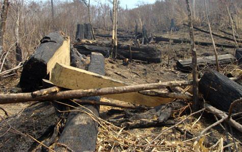 Rừng quốc gia Hoàng Liên bị cháy phơi bày nhiều vụ khai thác gỗ trộm. Ảnh do nhà báo Phạm Ngọc Dương chụp vào đầu tháng ba 2012, ngay sau vụ cháy.