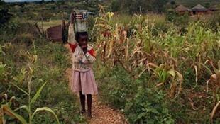 Le déclin du système d'agriculture commercial du Zimbabwe a poussé beaucoup Zimbawéens a cultiver leurs lopins de terre pour se nourrir, la réforme de la terre s'etant avérée désastreuse.
