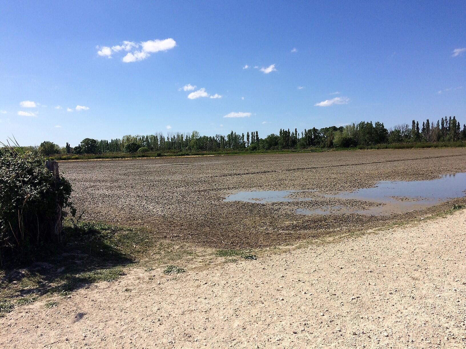 La rizière du Mas neuf de la Motte qui fait du riz bio en Camargue.