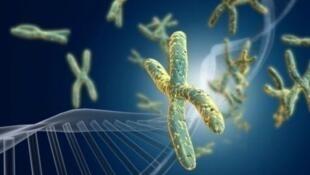 Des chromosomes.