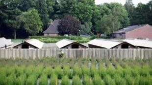 Une ferme de visons aux Pays-Bas à Oploo, le 3 juin.