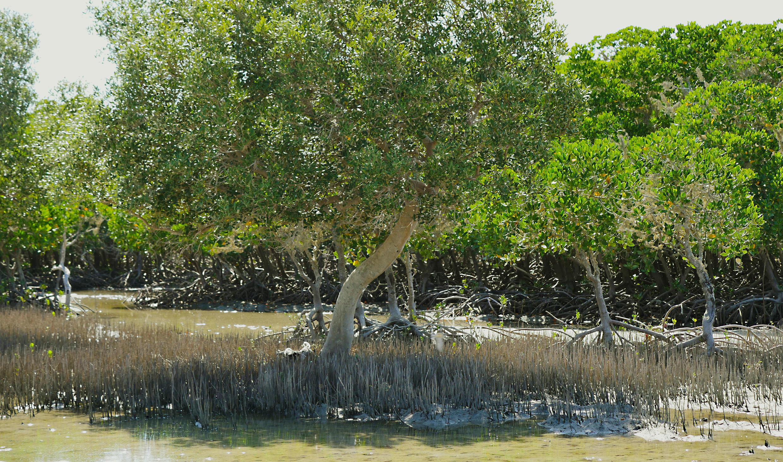 La mangrove au sud de Tuléar.