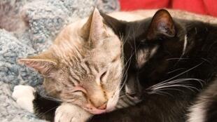 """Os animais agora serão considerados na França como """"seres vivos dotados de sensibilidade""""."""