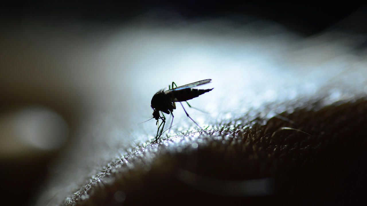 Image RFI Archive - paludisme moustique
