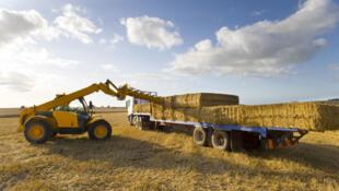 Le commerce du foin entre les États-Unis et la Chine, qui rapporte des milliards de dollars par an, s'effondre, entraînant vers le bas les prix du fourrage aux États-Unis.