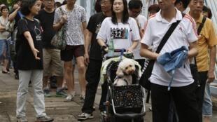 Người dân Hồng Kông xếp hàng bỏ phiếu cuộc trưng cầu dân ý không chính thức về cải cách dân chủ, ngày 22/06/2014