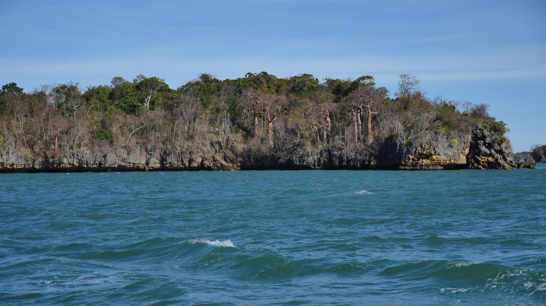 Baobabs de la baie de Moramaba. Jonchés sur les rochers, au pied des vagues, les géants des terres dominent la mer.