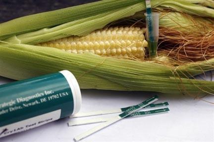 Test détectant les protéines contenues dans les diverses variétés du MON 810, un maïs génétiquement modifié par la firme Monsanto.