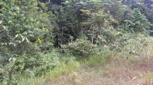 Forêt au Congo.