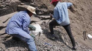 Equipa de investigadores do PaleoMoz no terreno.