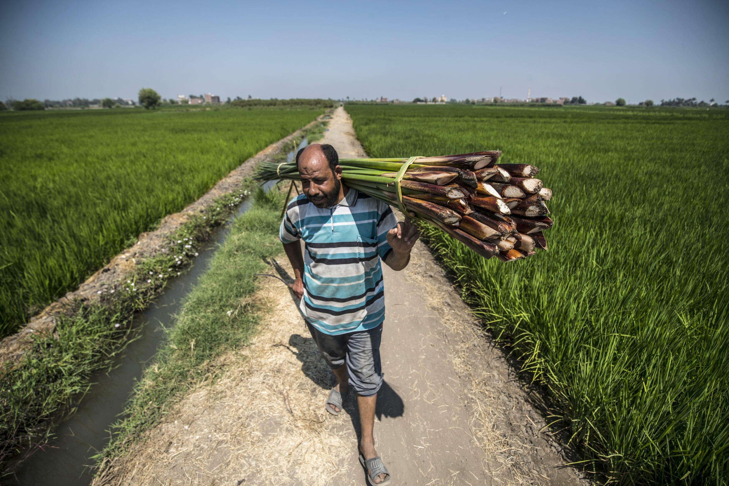 Egypt's Nile river valley is one of the areas the World Bank predicts people will leave due to water shortages