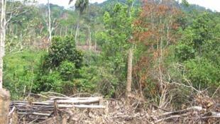 Une forêt de Côte d'Ivoire détruite. (Image d'illustration)