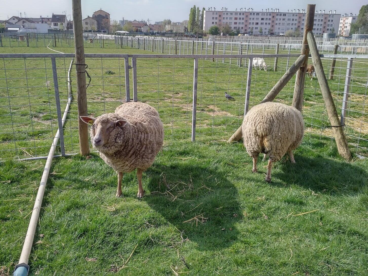 Cada oveja tiene su nombre de pila.