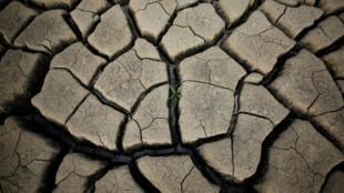 Les pluies censées commencer en mars ne sont toujours pas arrivées dans la plupart des régions du Kenya.