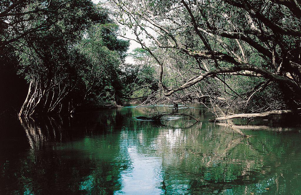 A l'image de la forêt amazonienne, certaines forêts d'Afrique centrale sont aussi en danger (illustration).
