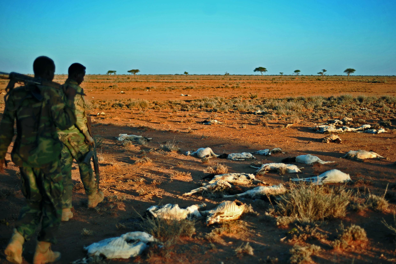 Cadáveres de cabras em Dhahar, no nordeste da Somália, em dezembro de 2016.