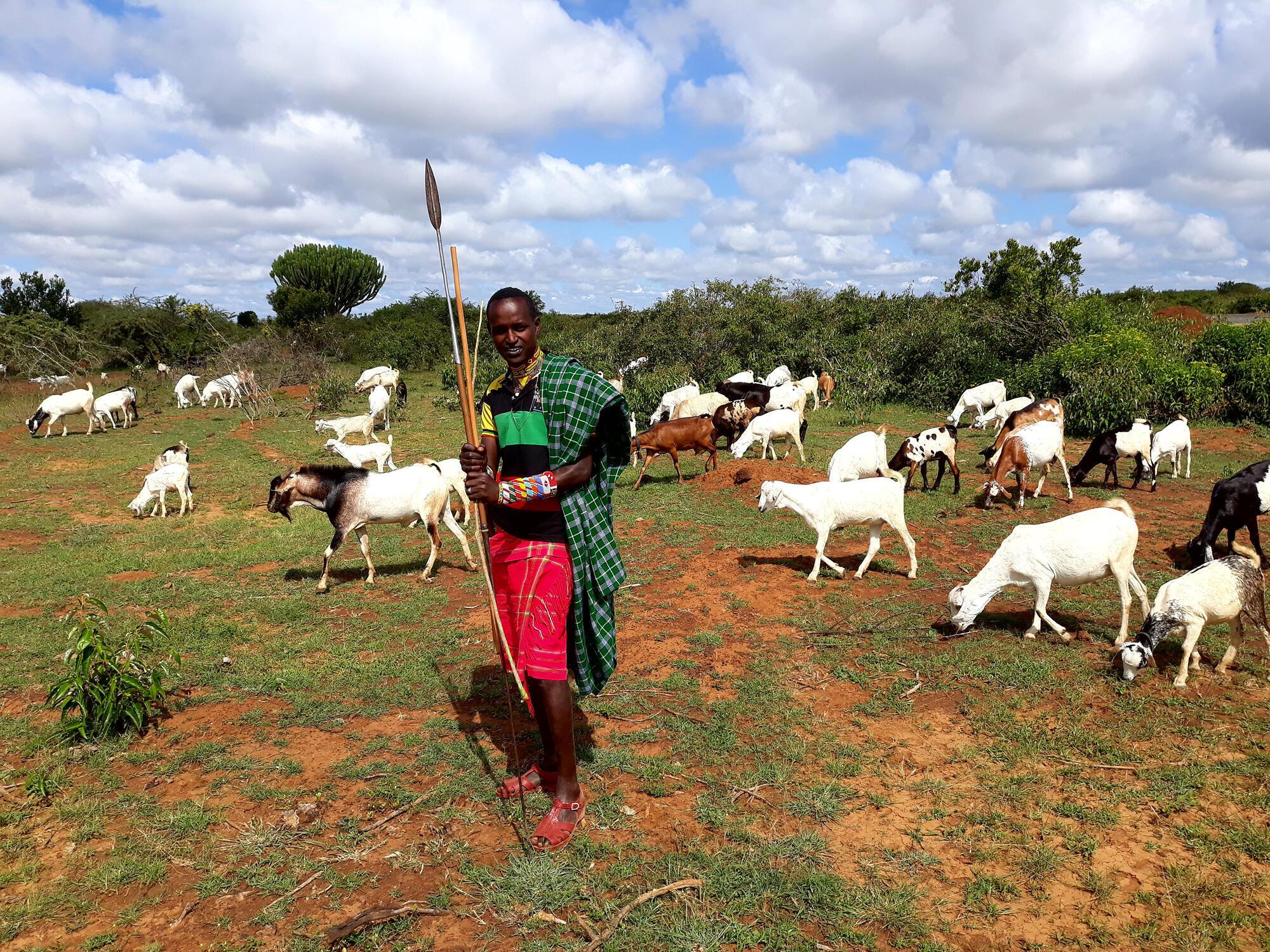 Un homme de la communauté des Samburu fait paître son bétail dans le comté de Laïpika où des zones de conservation privées ont subi des incursions non autorisées de bergers.