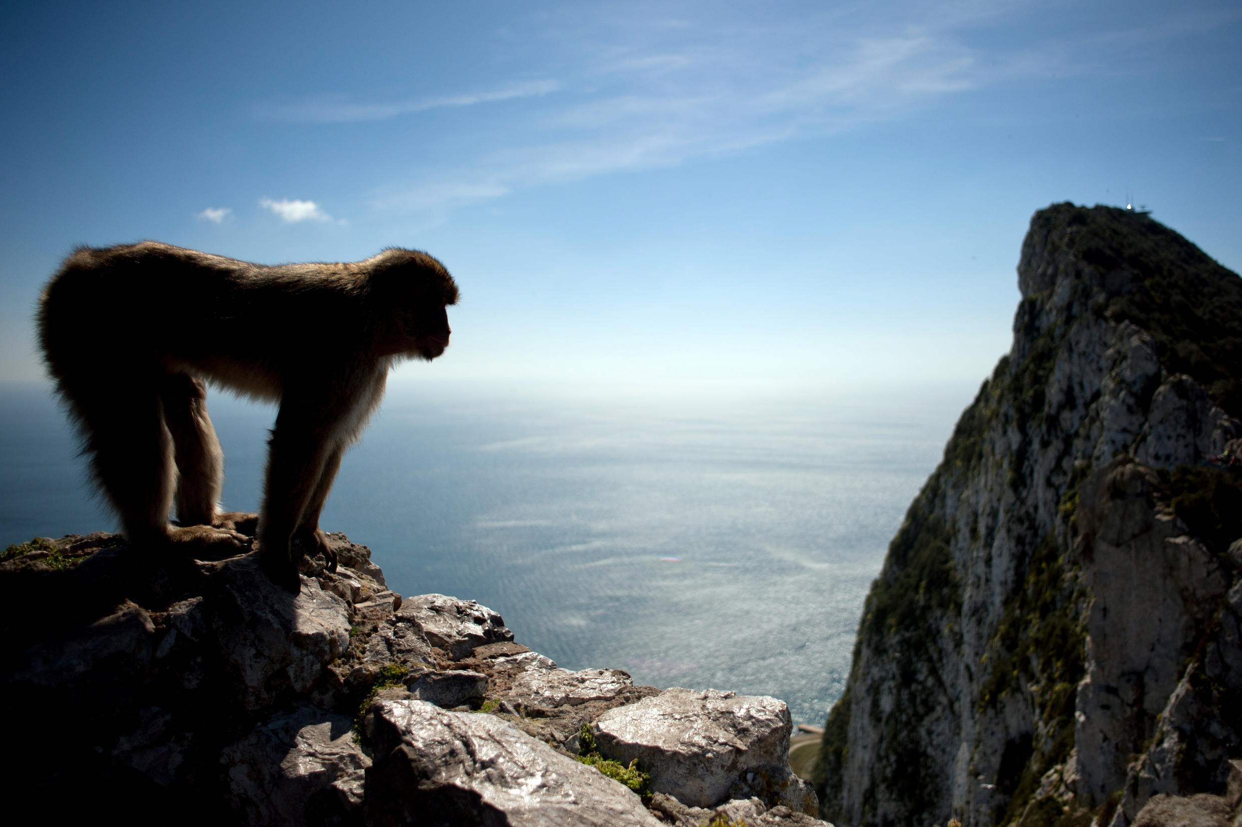 Local folklore has it that Gibraltar would cease to be British if the monkeys were to leave