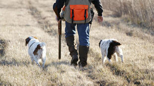 Un chasseur et ses deux chiens. (Image d'illustration).