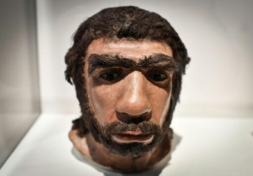 This file photo taken on March 26, 2018, shows a moulding of a Neanderthal man face displayed for the Neanderthal exhibition at the Musee de l'Homme in Paris.