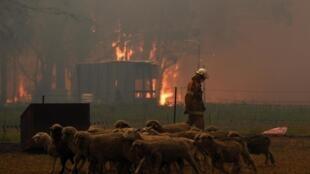 Au moins trois millions d'hectares, l'équivalent de la superficie de la Belgique, ont été détruits depuis septembre par les flammes en Australie.