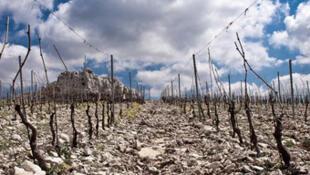 Le vignoble Bargylus, en Syrie.