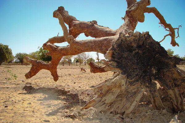 A seca atinge Burkina Faso.