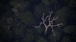 Uma vista aérea da Amazônia perto de Porto Velho, Estado de Rondônia, Brasil, Brasil, 21 de agosto de 2019.