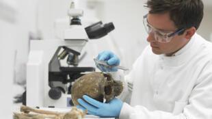 Un chercheur travaillant sur un crâne (image d'illustration).