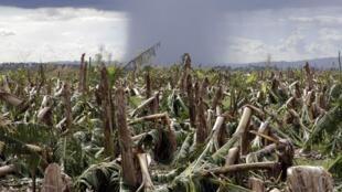 Le retour du typhon Bopha est attendu pour ce dimanche matin, 9 décembre 2012.