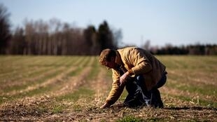 Le Canada fait appel à de la main d'œuvre venue de l'étranger pour les récoltes saisonnières.