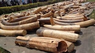 Stock d'ivoire saisi au port autonome de Lomé, le 4 février 2014.