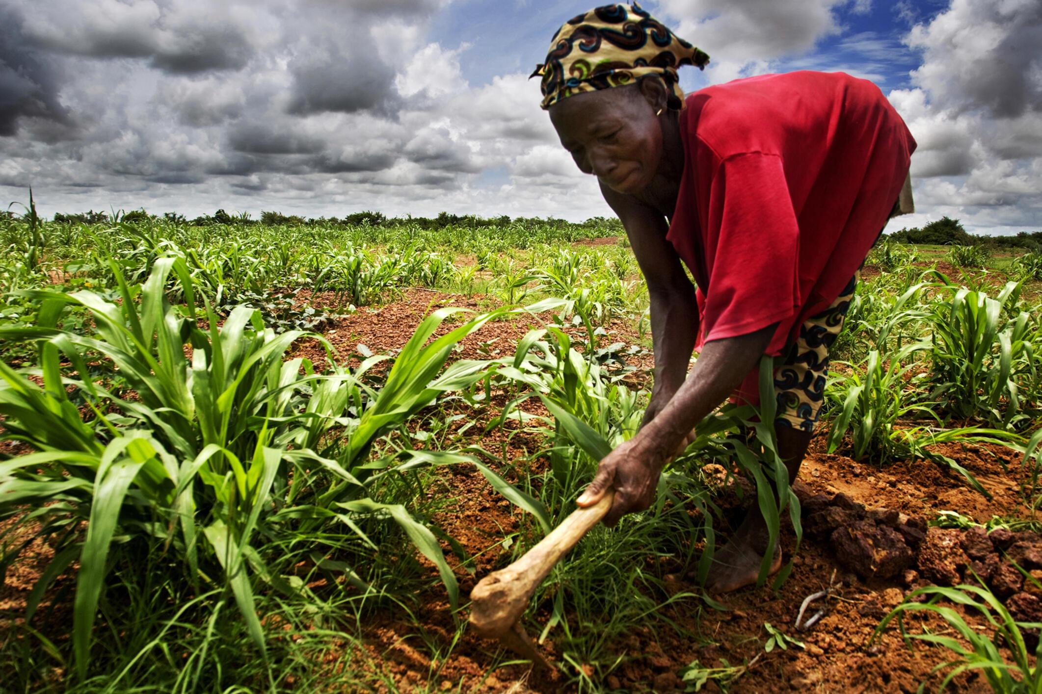 La question de l'accaparement des terres est une question cruciale au Mali.