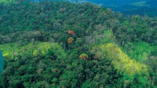 Forêt du Liberia.