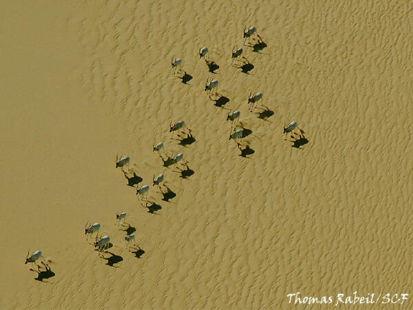 A view of antelopes from above in the Termit Tin-Toumma Nature Reserve in Niger