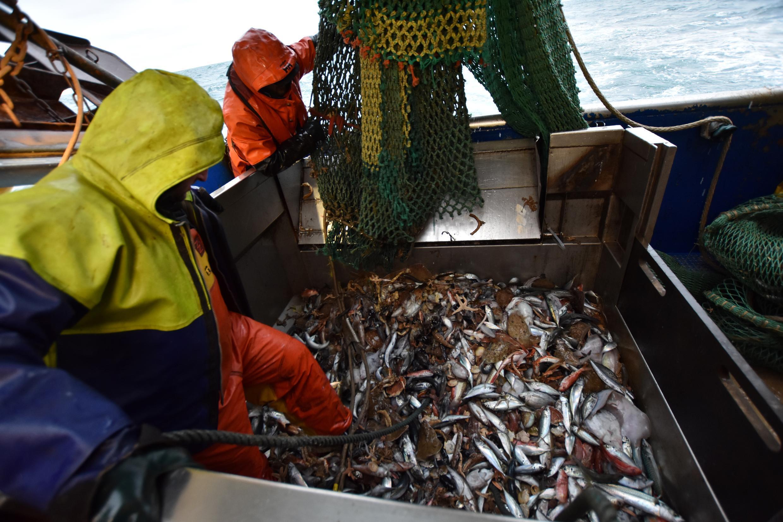 Fishing Brexit France United Kingdom UK Peche Royaume Uni