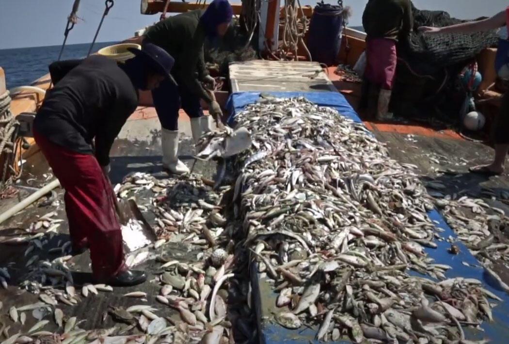 21 milhões de pessoas trabalham ilegalmente no setor da pesca é o que diz o relatório realizado pela FAO e pelo Vaticano.