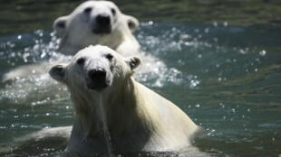 برای شنیدن توضیحات دکتر ناصر کرمی، استاد تغییرات اقلیمی در نروژ، بر روی تصویر کلیک کنید.