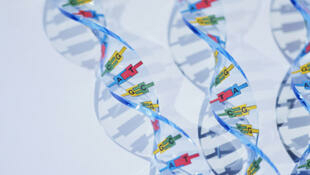 Modèles de double hélice d'ADN.