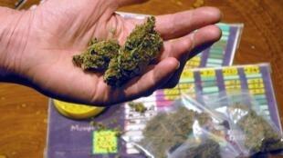 La carte cannabis, «wiet pass» en néerlandais, devait être généralisée au 1er janvier 2013.