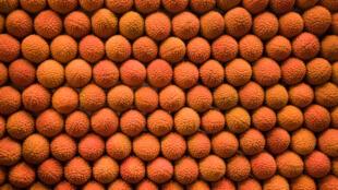 Les litchis de Madagascar sont, pour la récolte de 2019, meilleurs que ceux de 2018 grâce à l'amélioration de certaines pratiques agricoles.