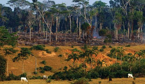 En la Amazonia.