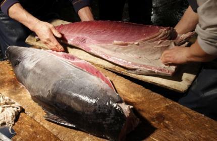A proibição das exportações do atum vermelho não foi aprovada em Doha