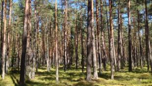Dajin Finland