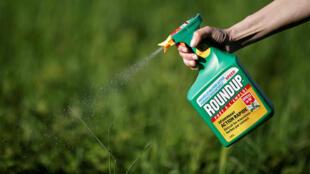 Thuốc diệt cỏ Roundup rất được các nông gia ưa chuộng vì hiệu quả và giá rẻ.