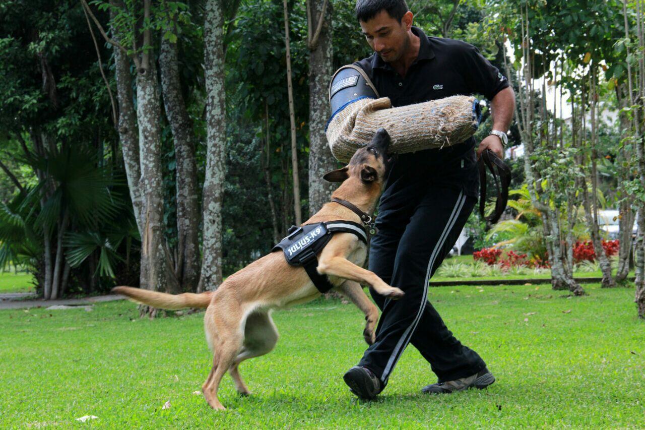Reinaldo Guillén entrena a un perro para acciones de defensa.