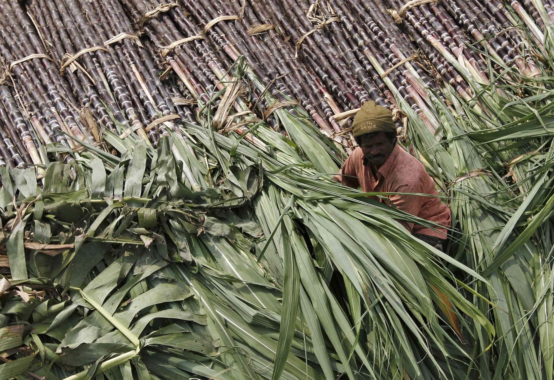 Un commerçant de canne à sucre au marché de gros de Chennai, en Inde, le 12 janvier 2014.