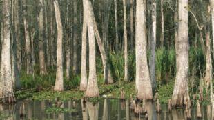Le bayou en Lousiane.