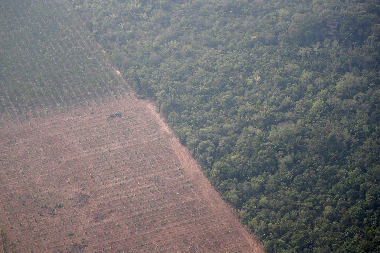 Очищенная от леса и превращенная в плантацию зона в штате Рондония на западе Бразилии